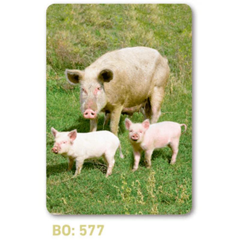 calendario de bolsillo cerdos