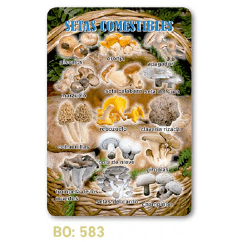 calendario de bolsillo setas comestibles