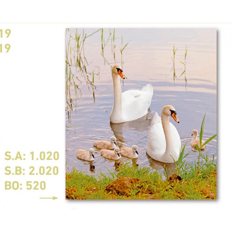 calendario de bolsillo foto cisnes